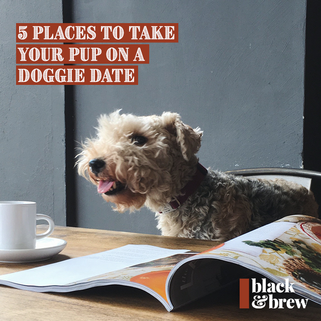 5 Places To Take Your Pup On A Doggie Date